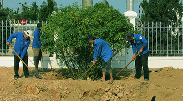 Thien Tan Group's Youth Union actively planting trees